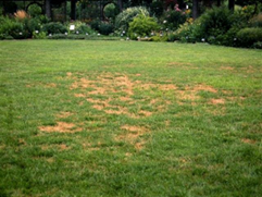 lawn treatment companies Atlanta GA