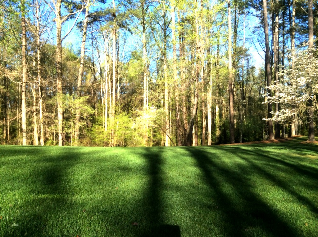 tree and lawn fertilizer companies in Atlanta GA