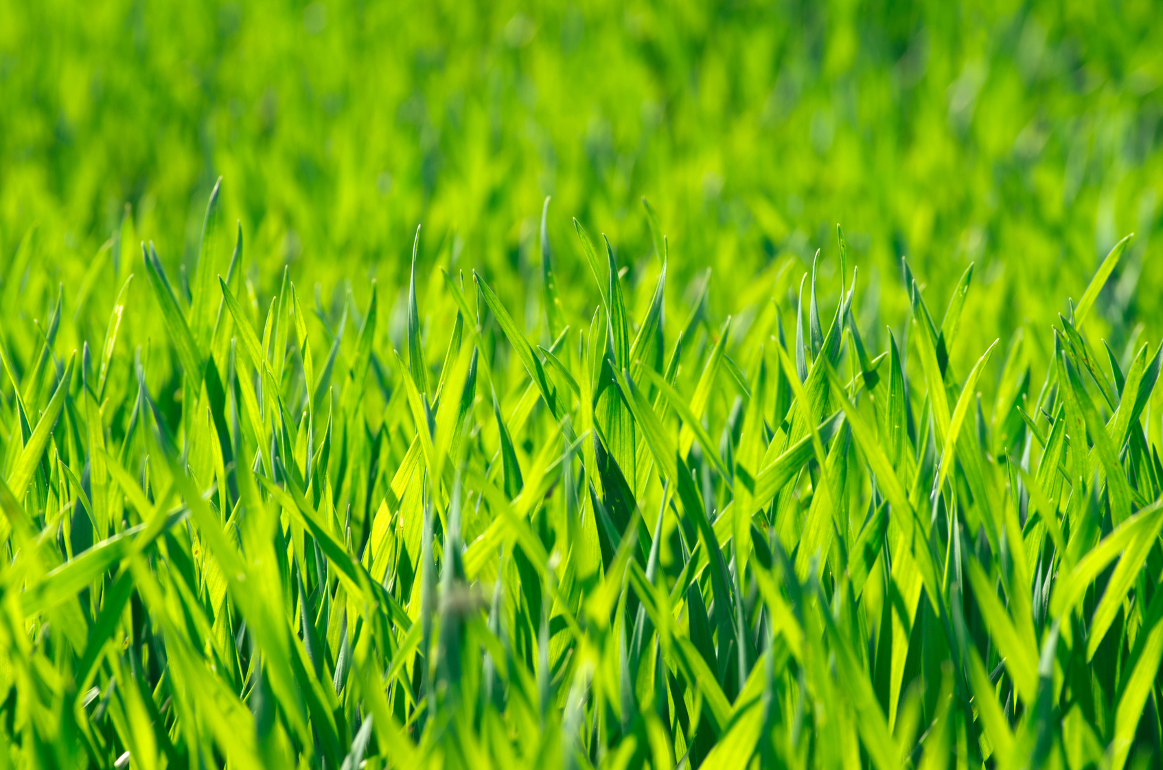 Green grass texture from a field
