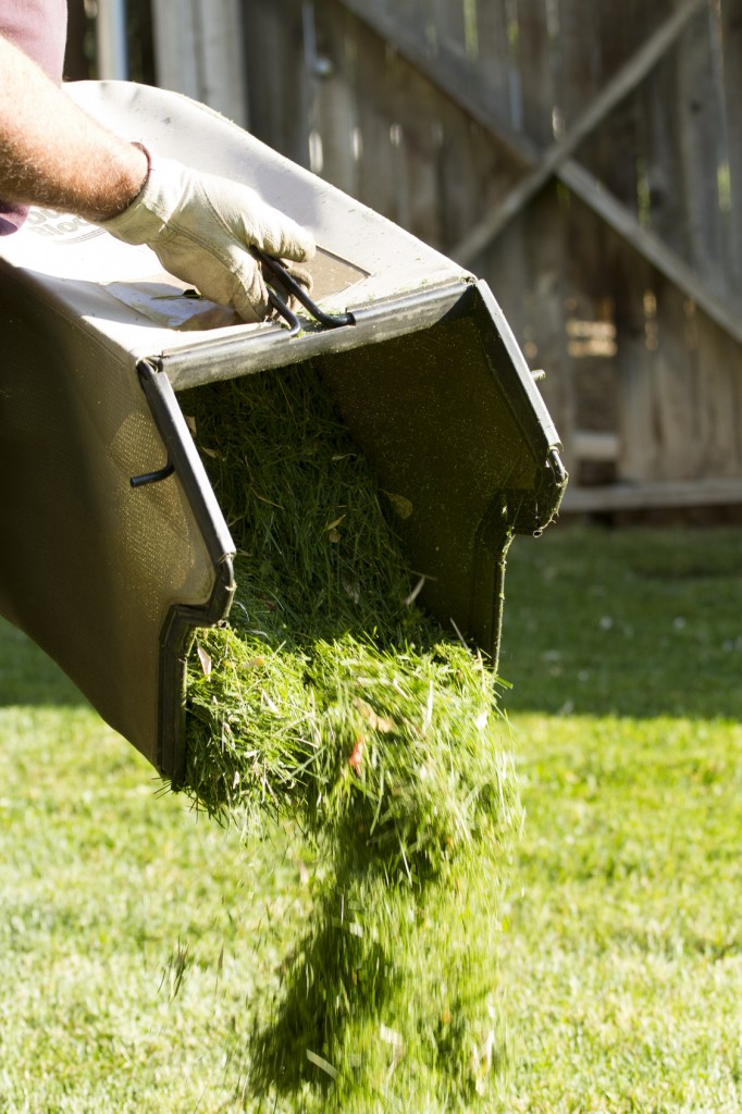 Dumping Grass Clippings