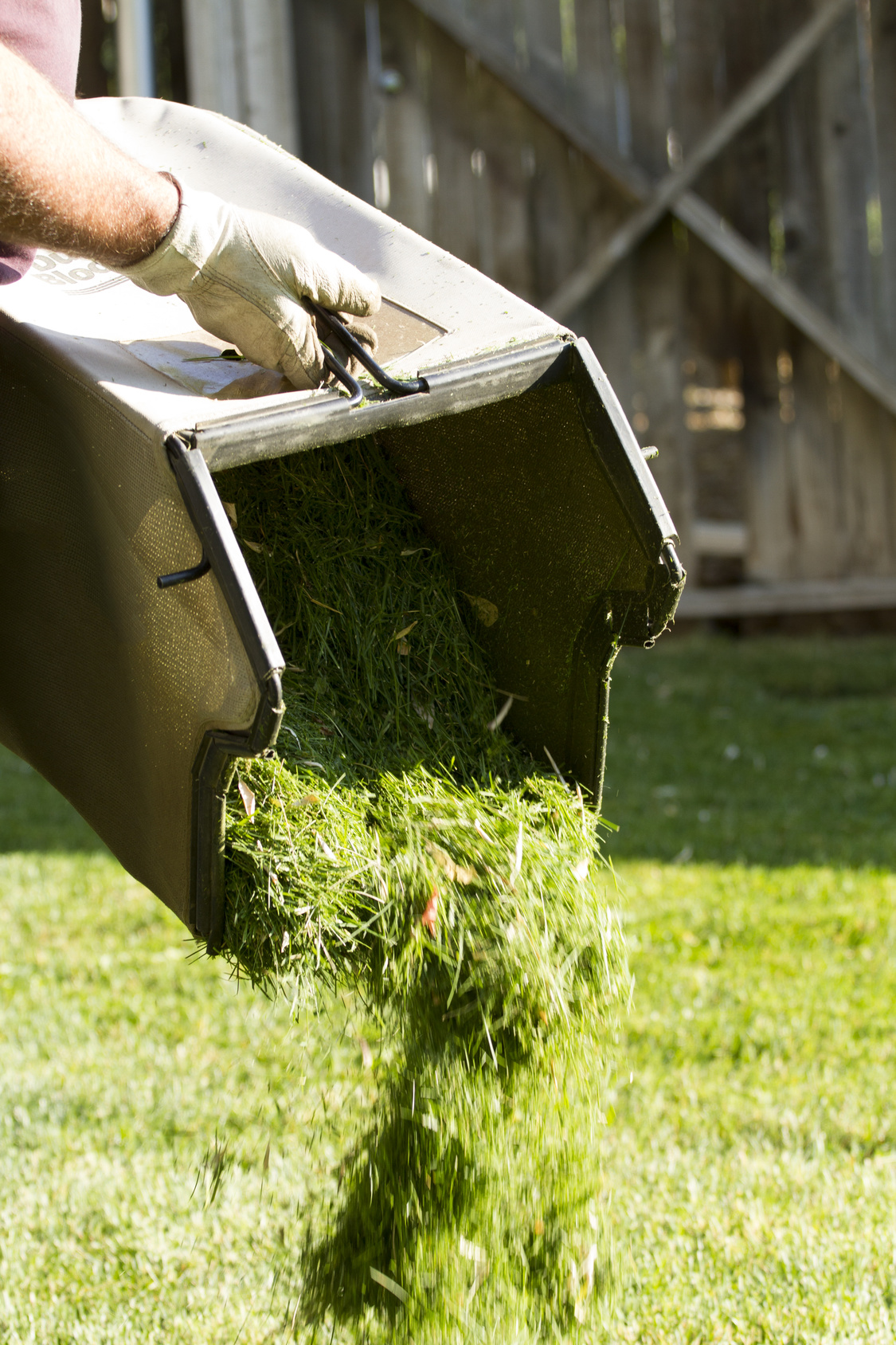 how to keep your lawn alive in winter