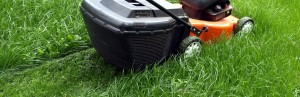 Close-up of mowing a green lawn with new lawnmower