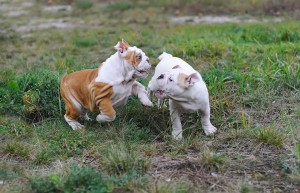 Dogs playing in damaged yard