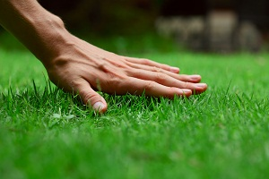 Summer Lawn Care Tips - Atlanta
